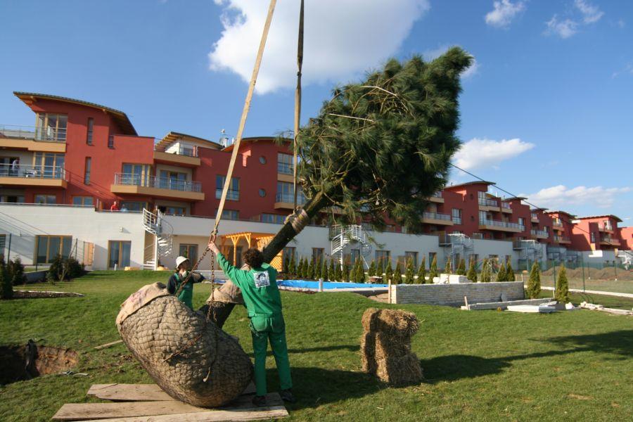 Baobab | Specialista na rodinné zahrady, stromy bez rizika